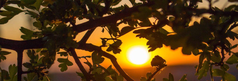 SonnenuntergangImBaum