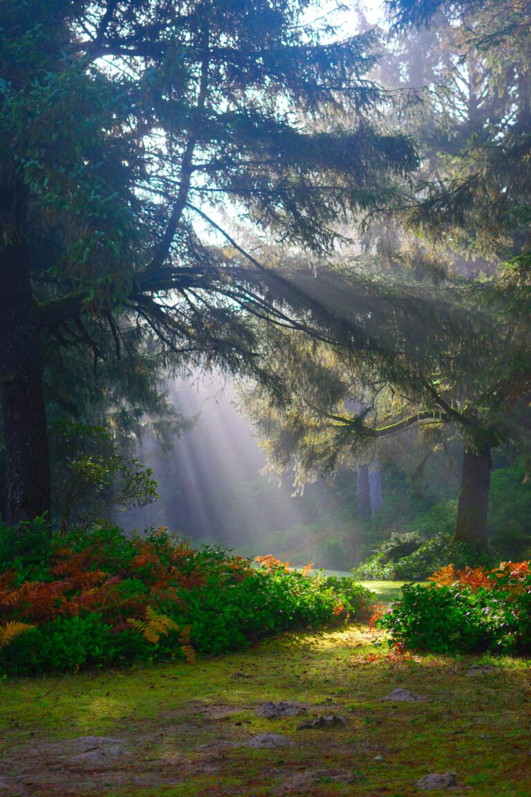 Sanft auf eine Waldlichtung fallendes Licht,  Blumen am Boden - Sinnbild für Naturcoaching