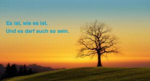 Akzeptanz: Kahler Baum im Sonnenuntergang